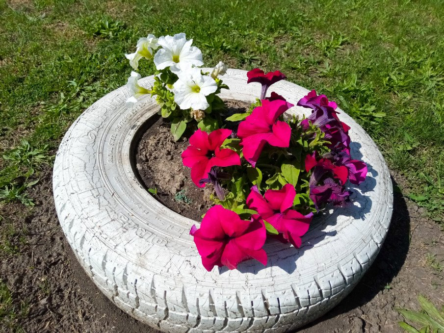 close up of a tire planter with large flowers