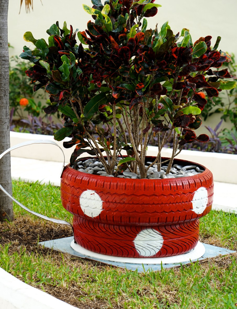 teacup tire planter filled with stones and small trees