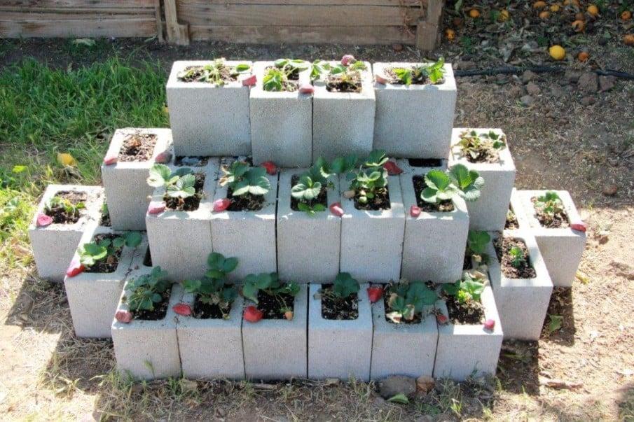 Cinder block strawberry planter building guide