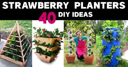 DIY Strawberry Planter Ideas