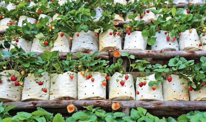 Fabric Bag strawberry wall idea