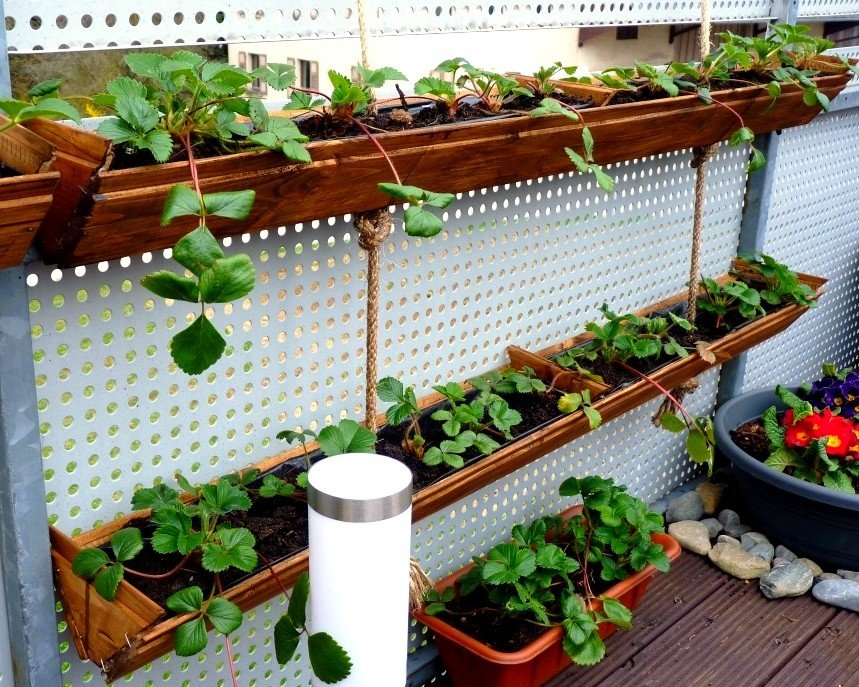 Homemade hanging gutters strawberry planter