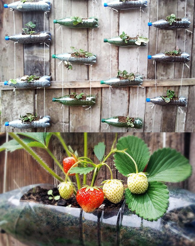 Plastic bottles strawberry planter ideas