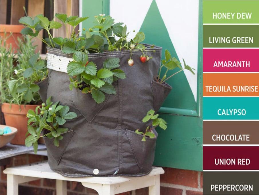 Home Depot strawberry Grow Bag idea