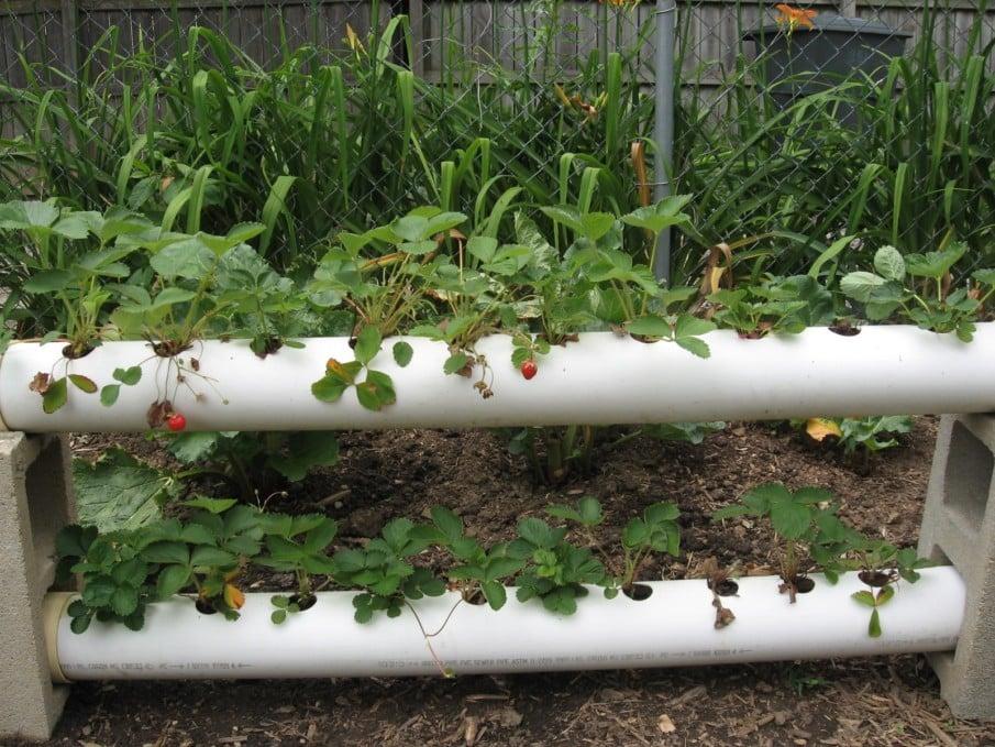 Horizontal strawberry planter ideas