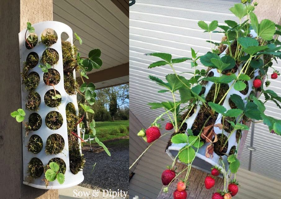 IKEA hack for making a strawberry container