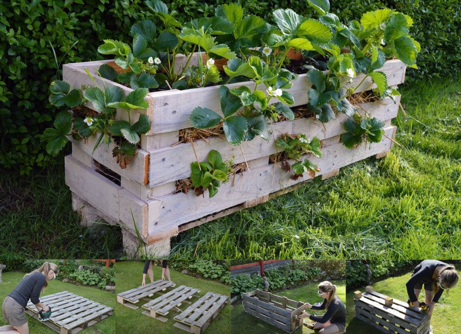 Strawberry DIY pallet box planter