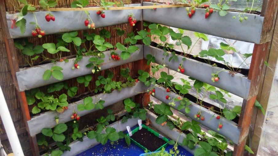 Strawberry wall ideas