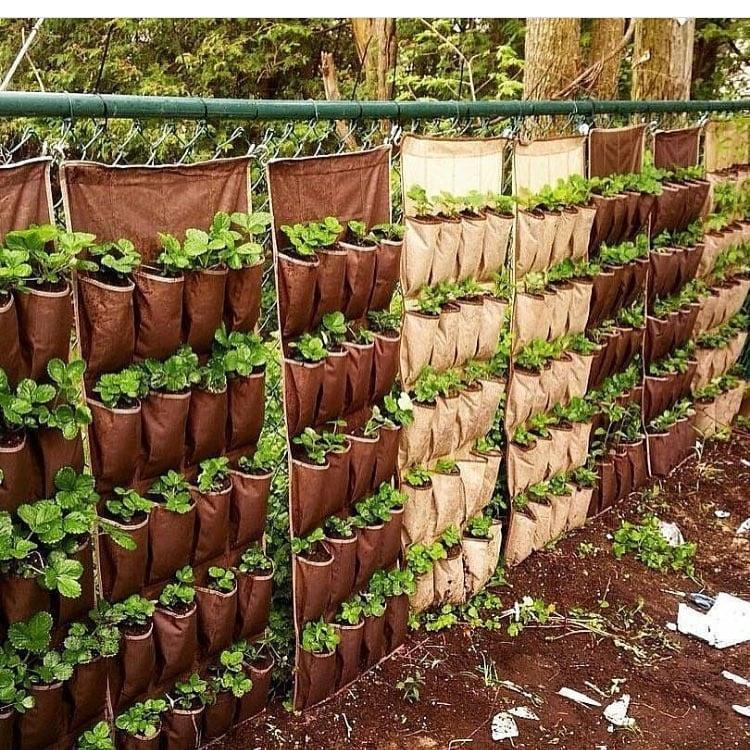 Cheap strawberry planter ideas