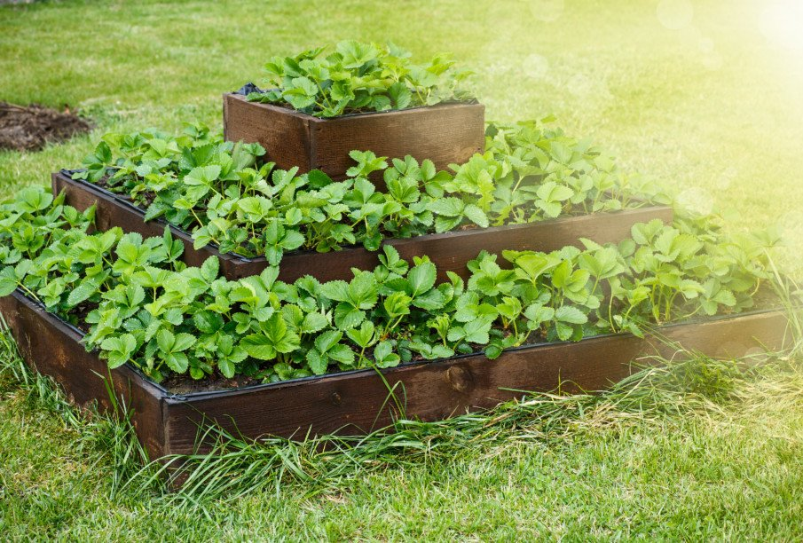 Large wooden tiered strawberry planter