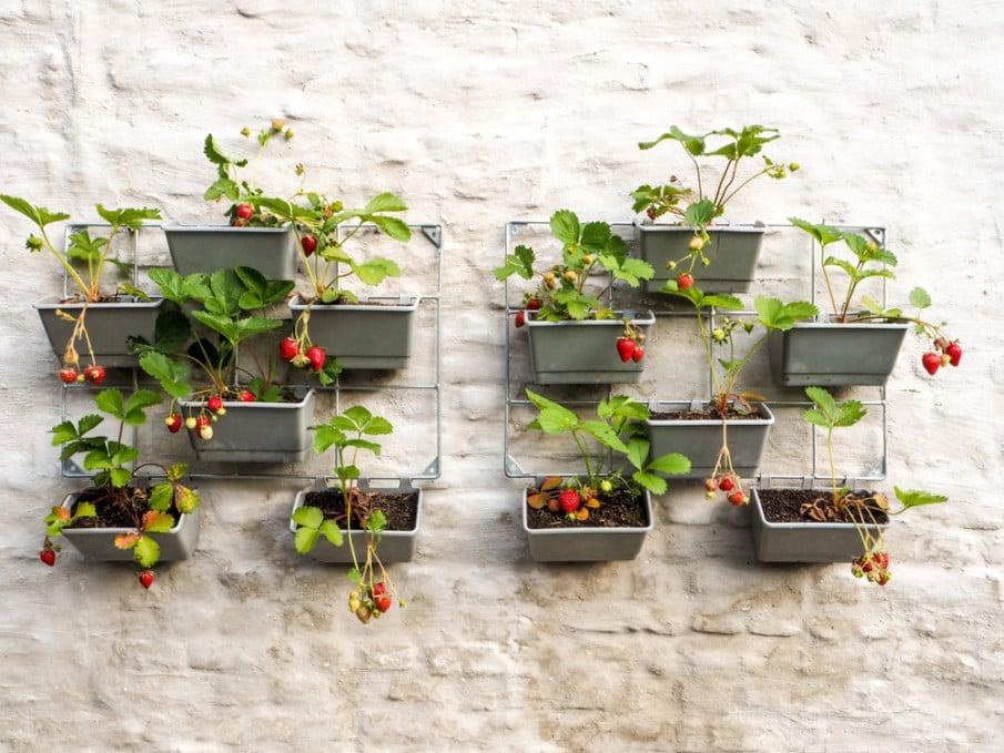 Plastic container organizer wall garden idea