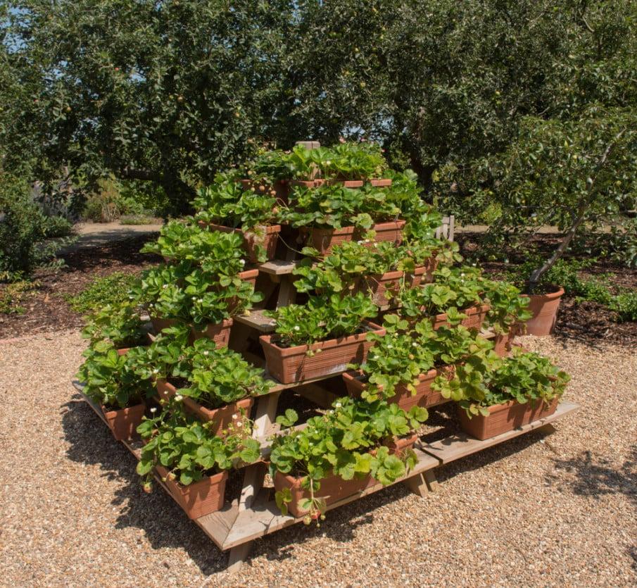 Unique strawberry container pyramid planter idea