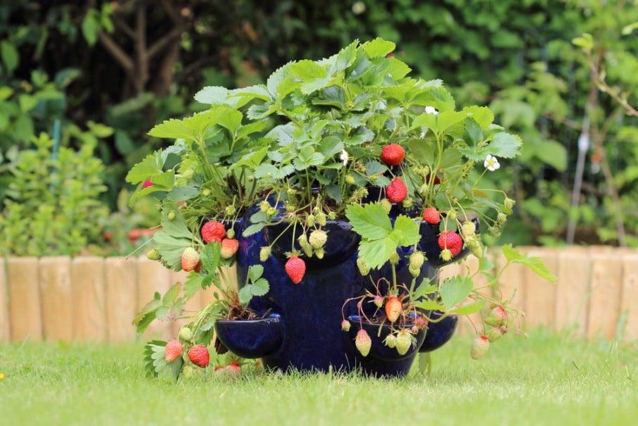 Elegant terracotta strawberry jar planter ideas