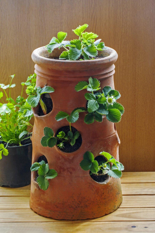 Strawberry jar ideas