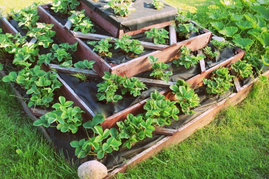 Wooden tiered strawberry planter ideas