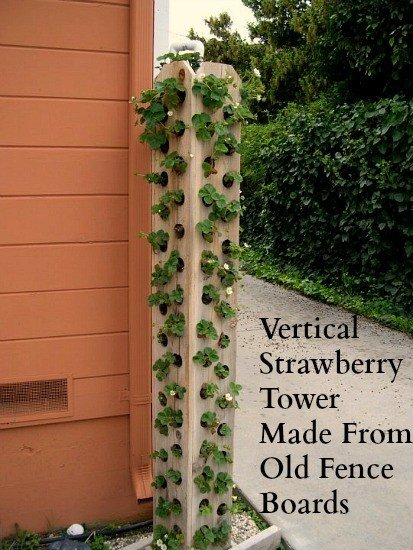 Strawberry tower made from recycled fence boards