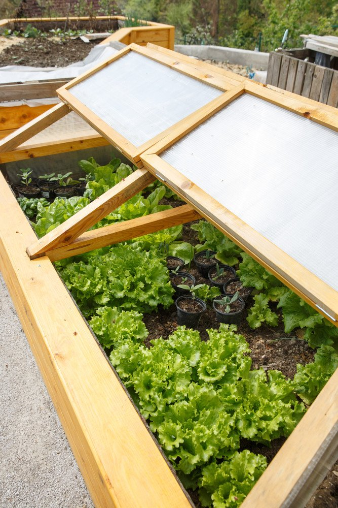 A greenhouse raised bed with folding enclosures.