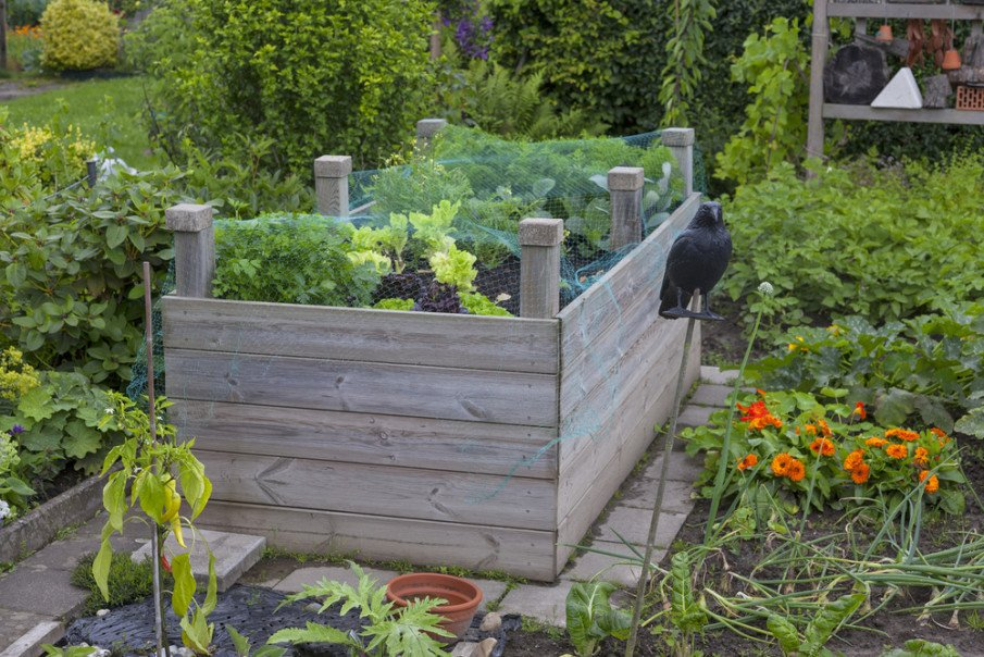 A plastic net protects a raised garden bed from Cabbage White Butterflies