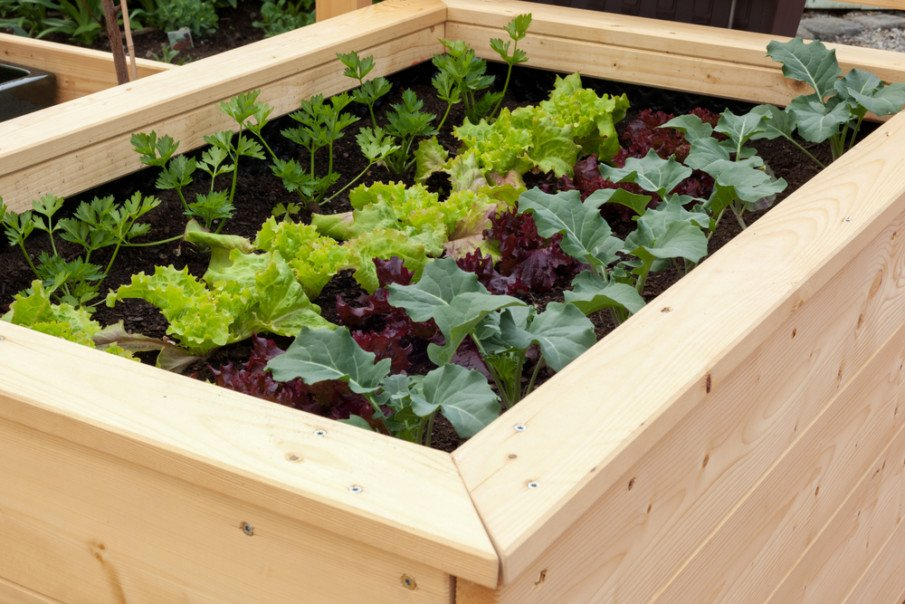 A nice raised garden bed plan build from pine planks using screws