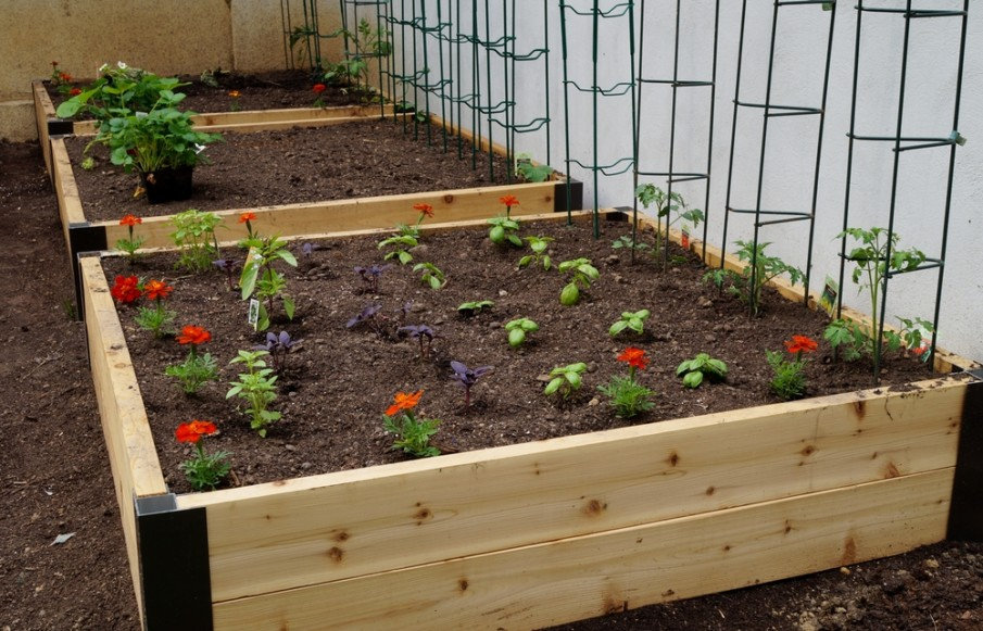 Metal trellis added to wooden raised beds