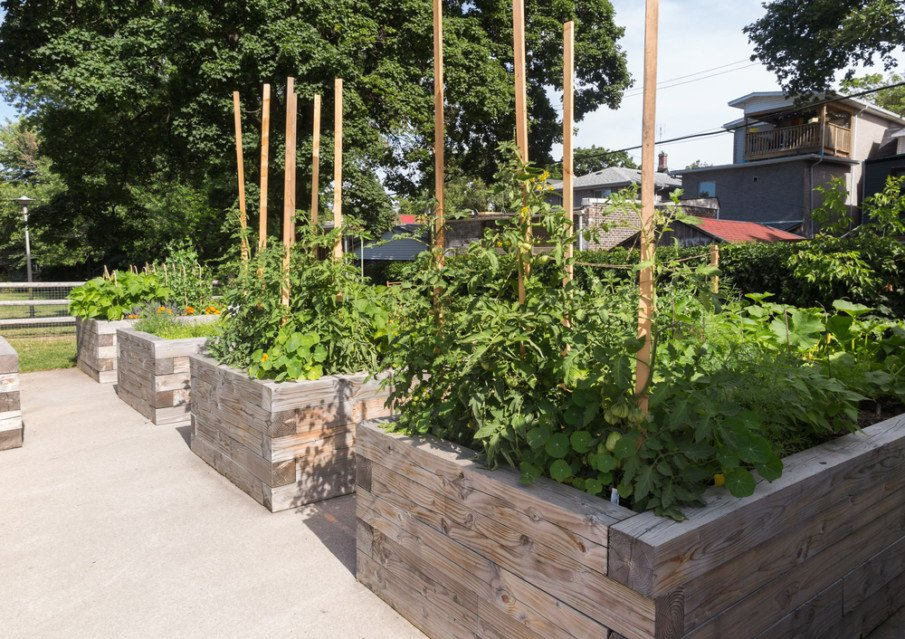 Wooden sticks and some rope replace the trellis