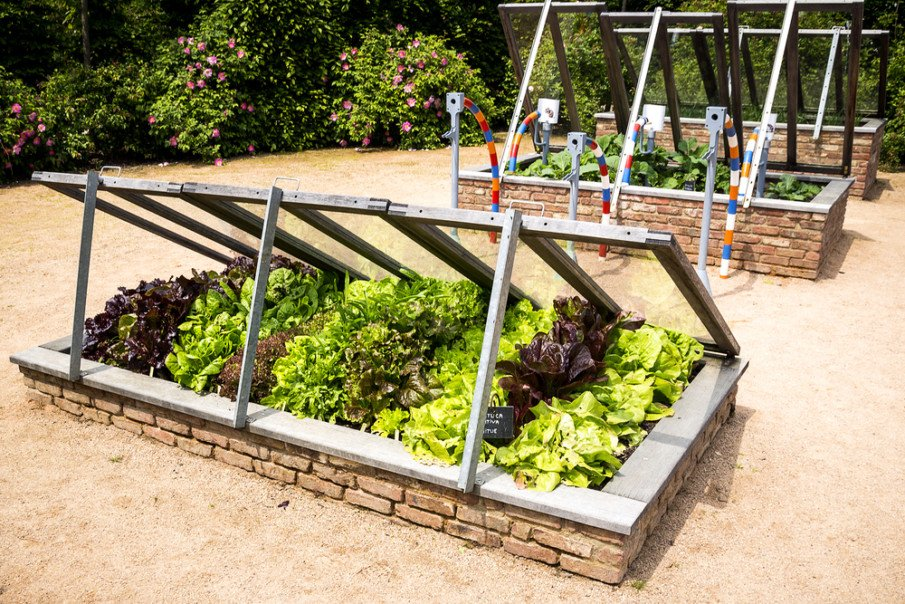 Garden bed covered with old glass windows for a greenhouse like effect